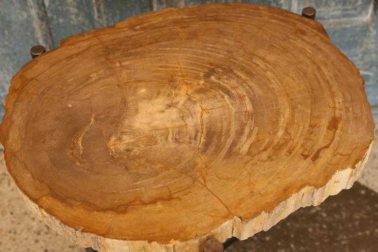 Petrified Wood Top Table With Iron Base For Sale At 1stdibs