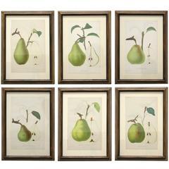 Set of Six 19th Century Framed Pear Prints