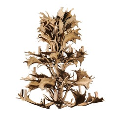 Naturally Shed 24-Light Antler Chandelier from the 1940s, Rewired for the US