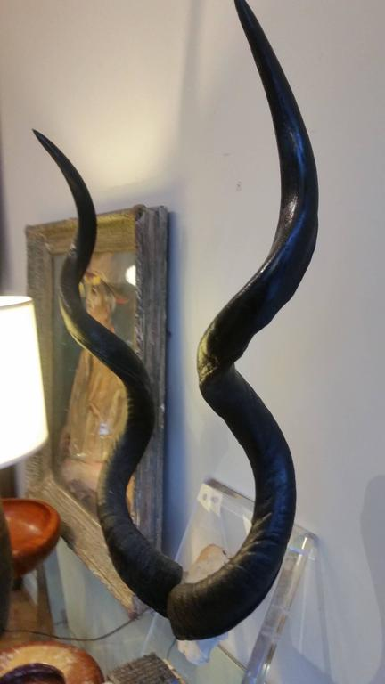 Mounted Wall Kudo Horns Trophy on Thick Lucite    For Sale 3