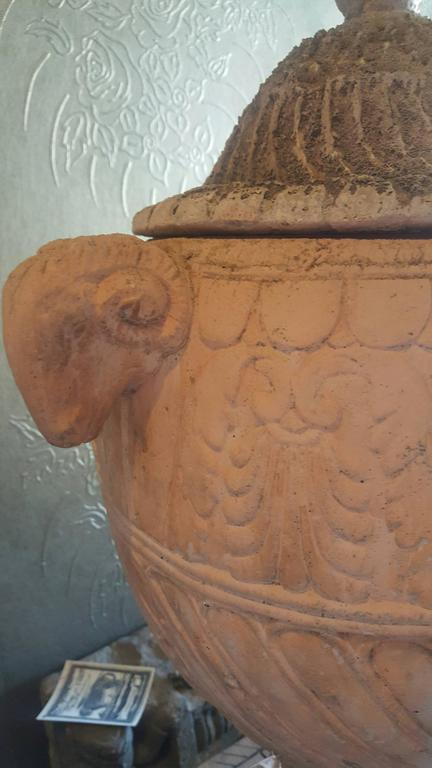 Antique French Terracotta Urn 3