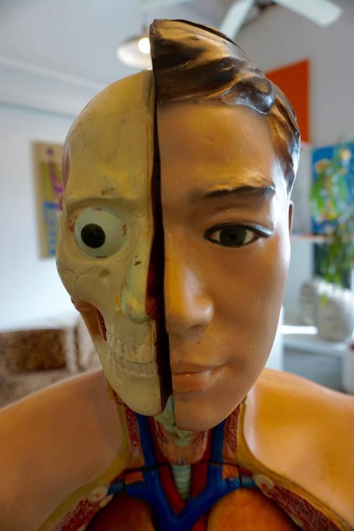 Male Anatomical Torso 3