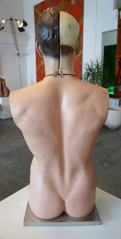 Male Anatomical Torso 6