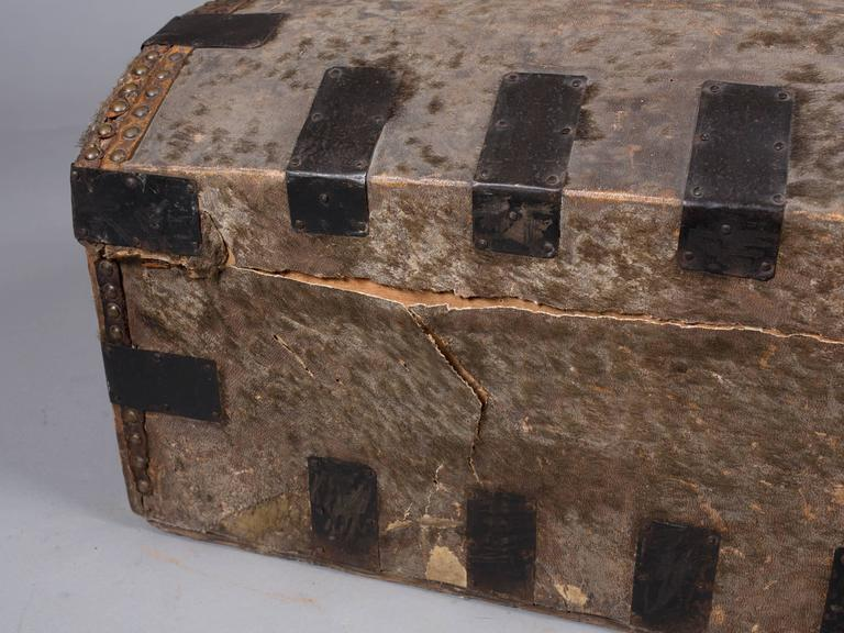 Collection of 19th Century Hide and Leather Trunks 4