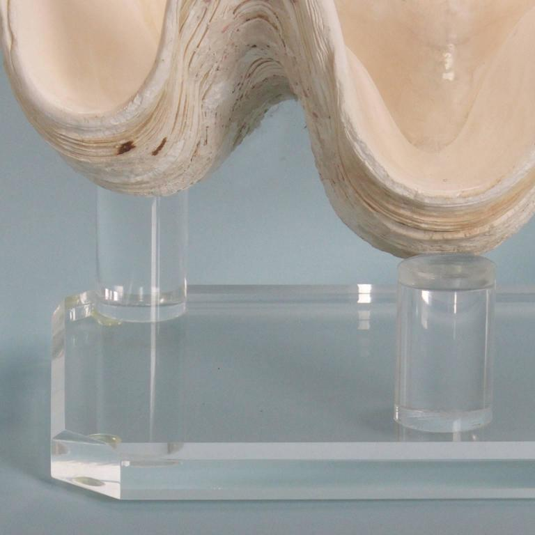 Chic Clam Shell on a Custom Lucite Base For Sale 1