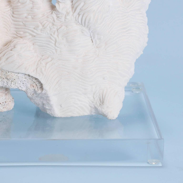 Solomon Islands Exclusive Rugosa White Coral Sculpture Mounted on Lucite For Sale