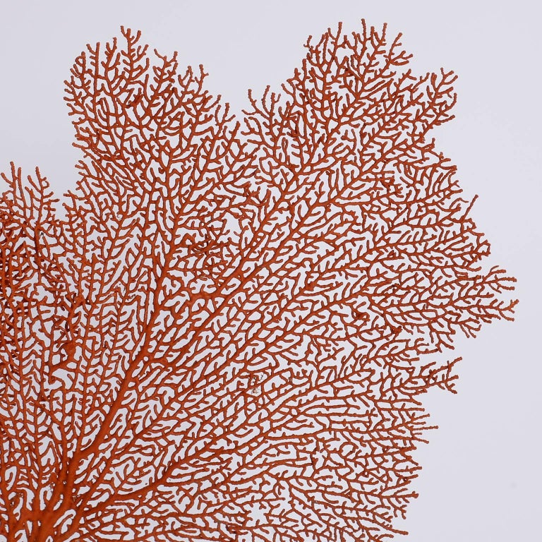 Organic Modern Red Sea Fan on Lucite For Sale