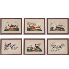 Six Chinese 19th Century Pith Paintings