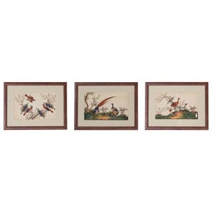 Three Chinese Pith Paintings