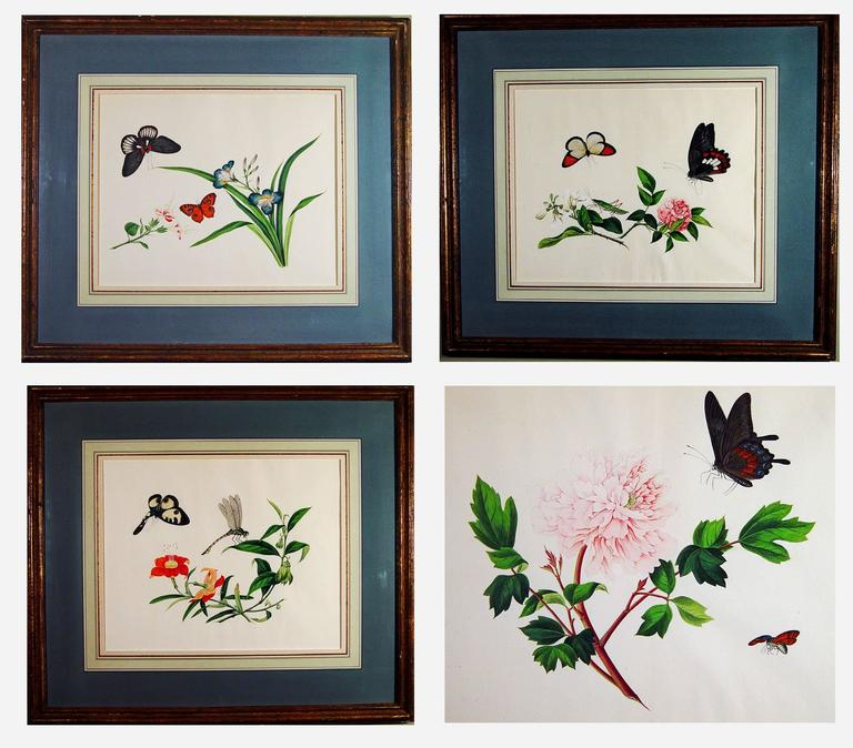 Chinese botanical large watercolors on paper, circa 1800 (four)  These can be sold as pairs too.
