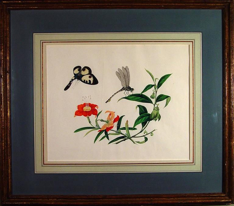 Chinese Export Chinese Botanical Large Watercolors on Paper, circa 1800 'Four' For Sale