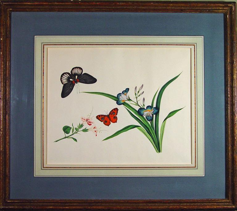 Painted Chinese Botanical Large Watercolors on Paper, circa 1800 'Four' For Sale