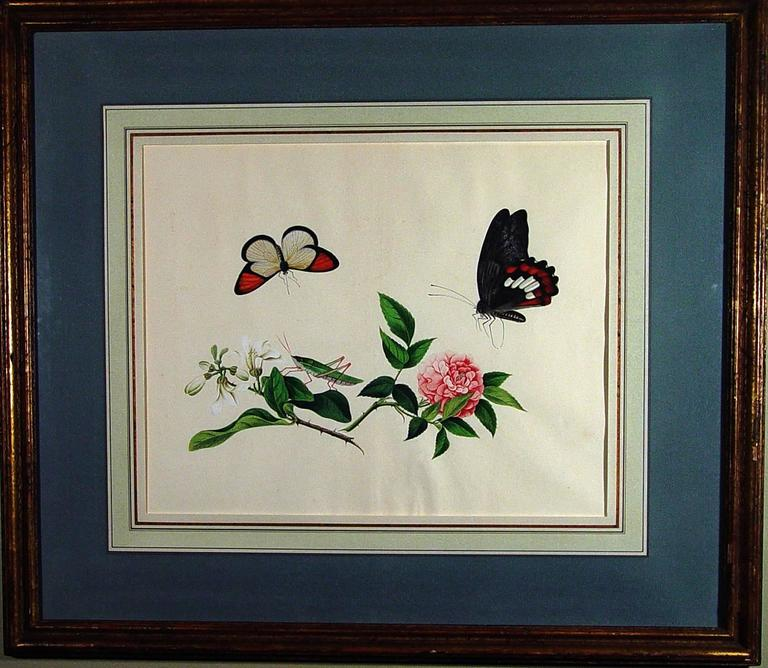 Chinese Botanical Large Watercolors on Paper, circa 1800 'Four' In Good Condition For Sale In Downingtown, PA