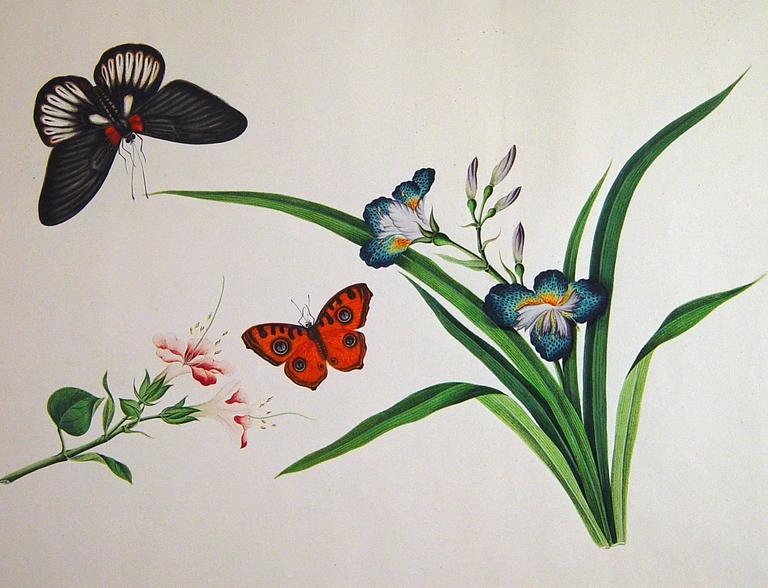 19th Century Chinese Botanical Large Watercolors on Paper, circa 1800 'Four' For Sale