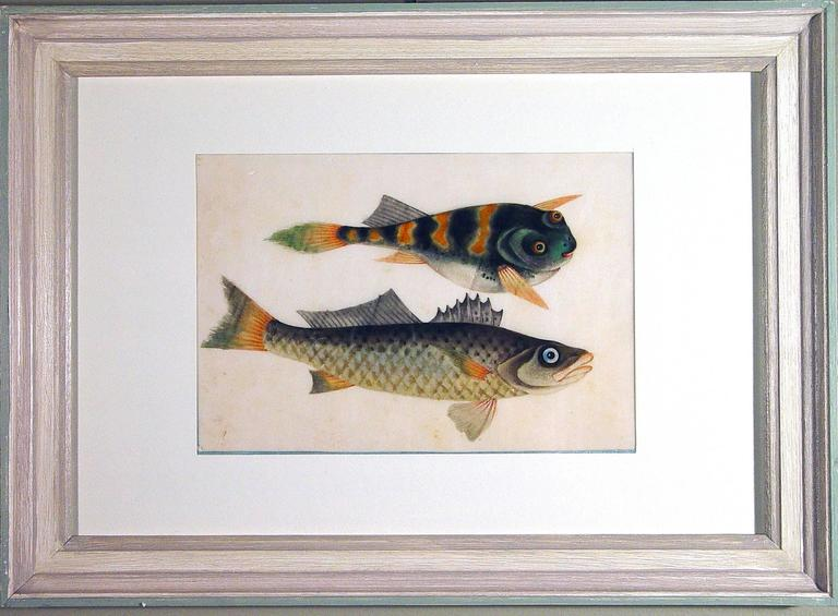 Chinese Watercolours of Fish in a set of nine on Pith Paper For Sale ...