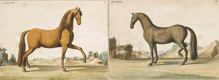 Hand colored prints of horses from