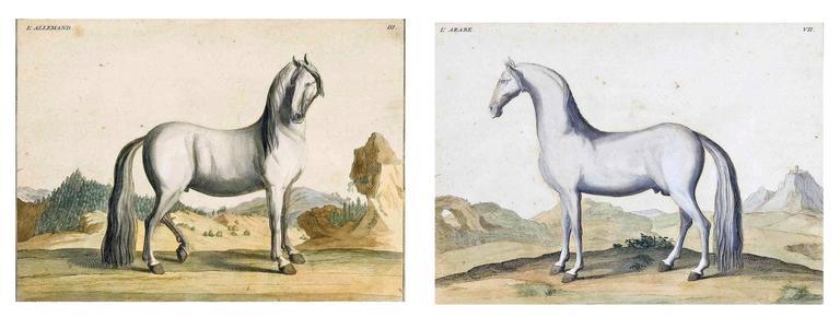 Georgian Antique Horse Prints by Baron D'Eisenberg, circa 1747 For Sale