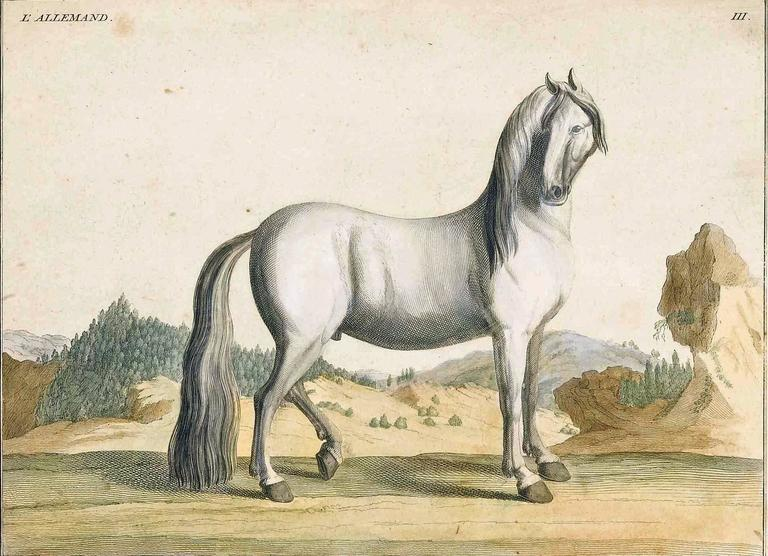 German Antique Horse Prints by Baron D'Eisenberg, circa 1747 For Sale
