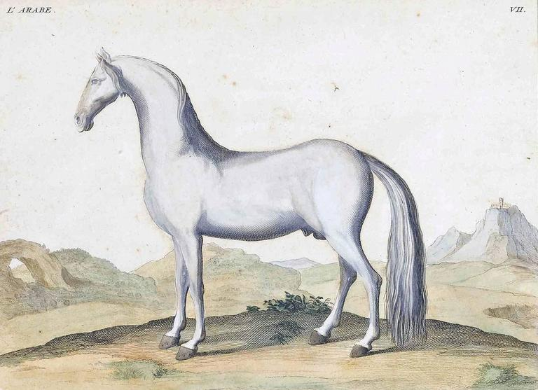 Antique Horse Prints by Baron D'Eisenberg, circa 1747 In Good Condition For Sale In Downingtown, PA