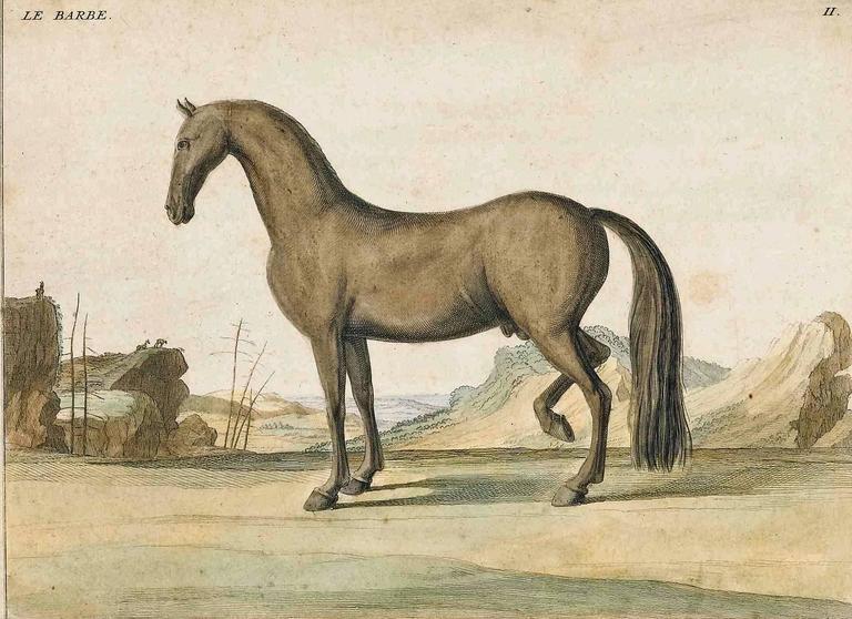 Paper Antique Horse Prints by Baron D'Eisenberg, circa 1747 For Sale