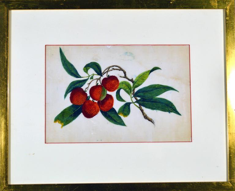 The 19th century Chinese watercolors on pith paper of plants and vegetables within a gilt frame are wonderfully naive and charming.