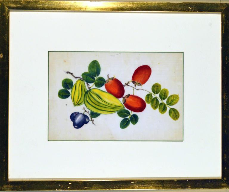 Chinese Export China Trade Watercolor Paintings of Vegetables, Set of Six For Sale