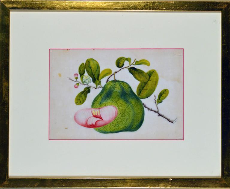 Chinese China Trade Watercolor Paintings of Vegetables, Set of Six For Sale