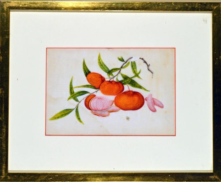 19th Century China Trade Watercolor Paintings of Vegetables, Set of Six For Sale