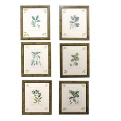 Set of Six, 19th Century French Botanicals