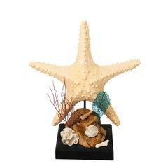 Nautical Shell Display with Starfish
