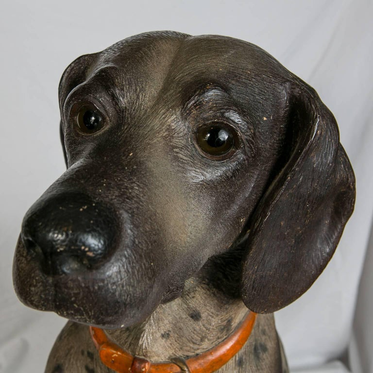 A rare and charming lifesize model of a hound with an outstanding face. This dog is a hunter, sturdy, and muscular he has acute scenting powers to follow a trail and has great stamina to run down quarry. With his master he is sweet and gentle. Made