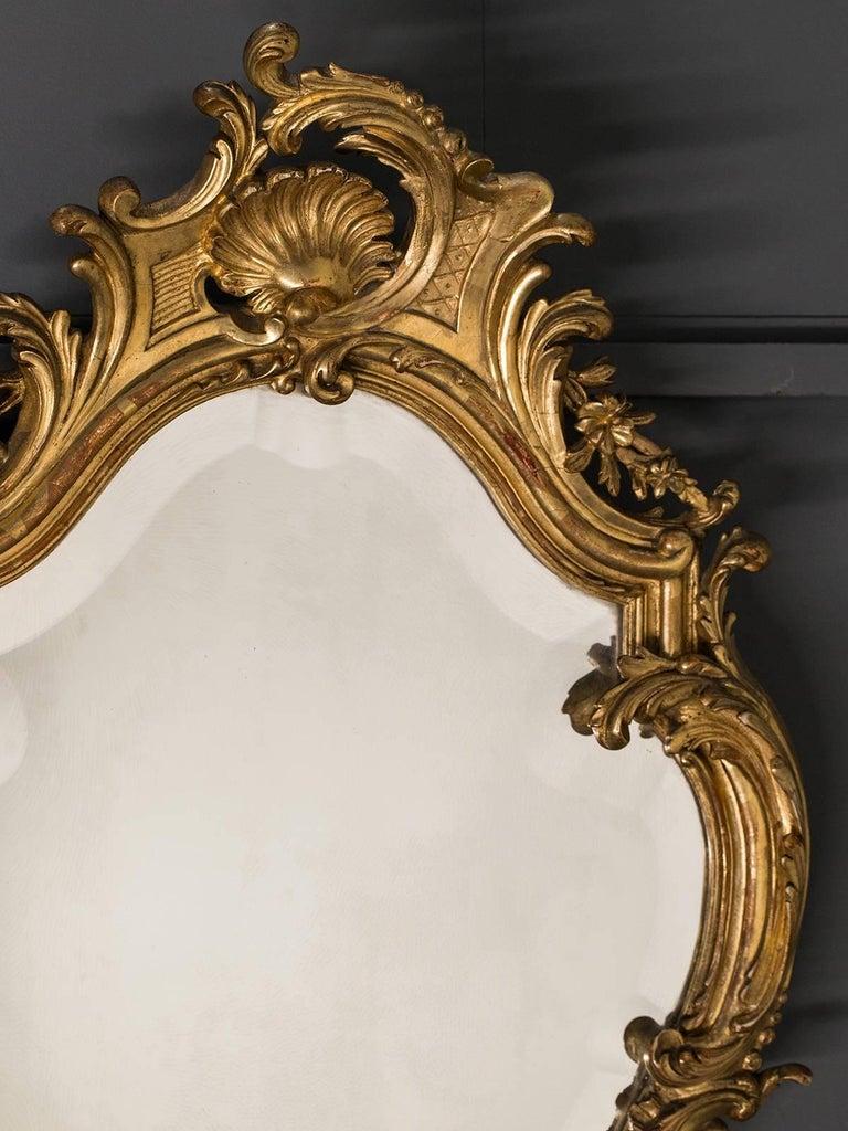 Antique French Louis Xv Style Rococo Mirror Circa 1890