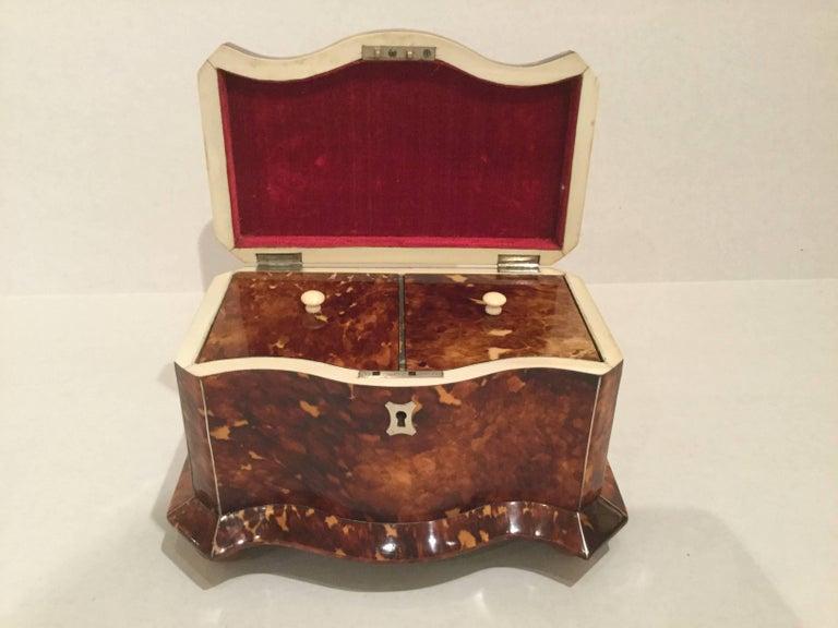 19th Century Tortoiseshell Tea Caddy 2