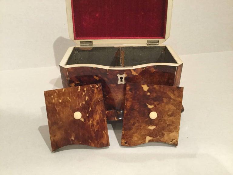 19th Century Tortoiseshell Tea Caddy 3