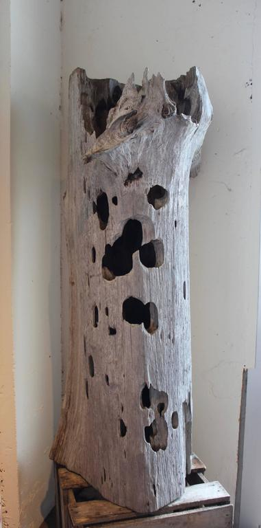 Organic Modern Organic Coastal Driftwood Trunk Sculpture For Sale