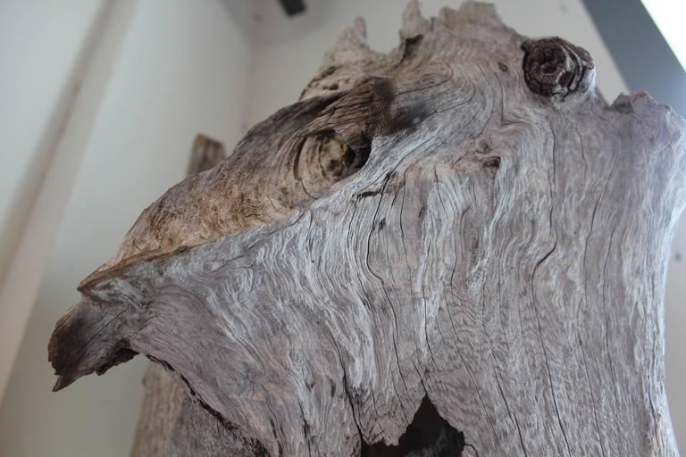 20th Century Organic Coastal Driftwood Trunk Sculpture For Sale