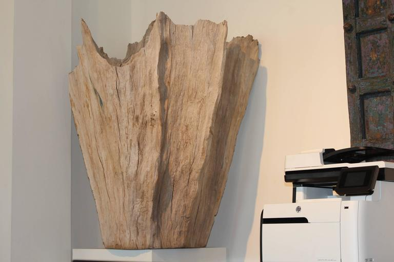 Central Asian Organic Driftwood as Sculpture For Sale