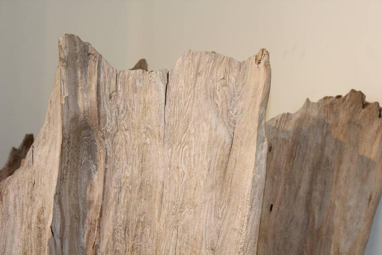 Organic driftwood as sculpture.