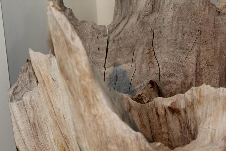 Organic Modern Organic Driftwood as Sculpture For Sale