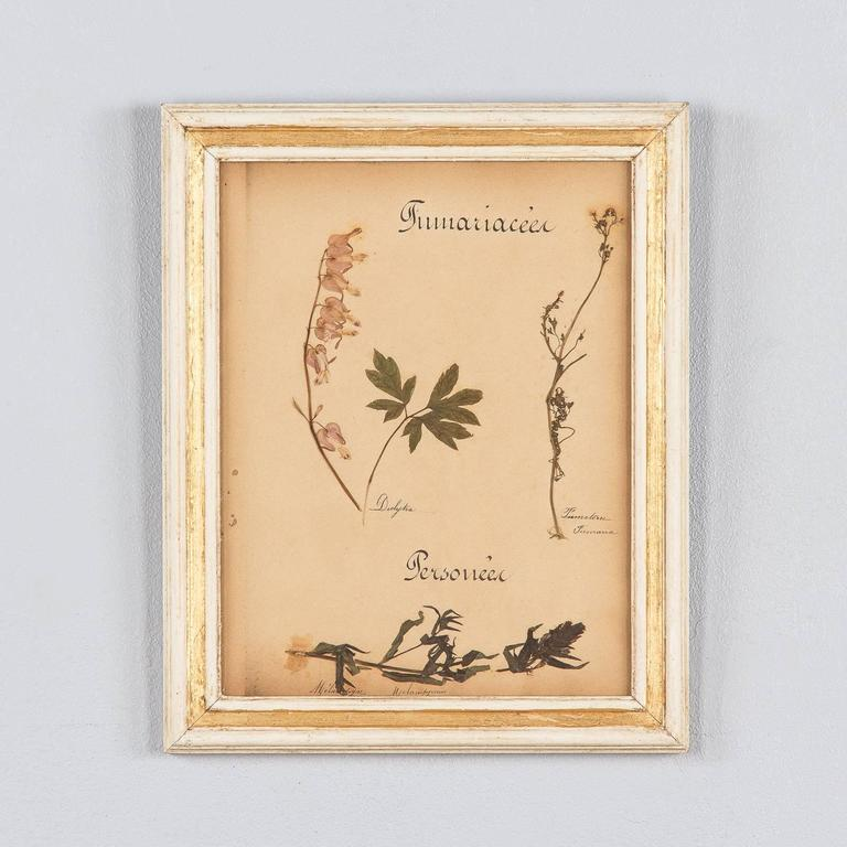 Set of Six French Frames with Pressed Botanicals, circa 1930s For Sale 2