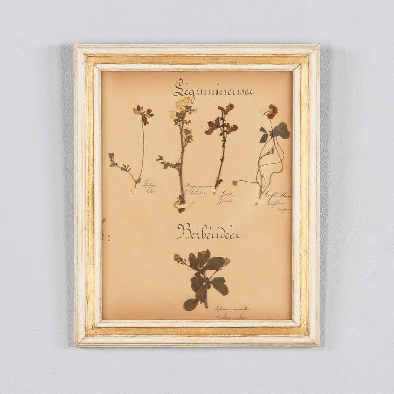 Set of Six French Frames with Pressed Botanicals, circa 1930s For Sale 3