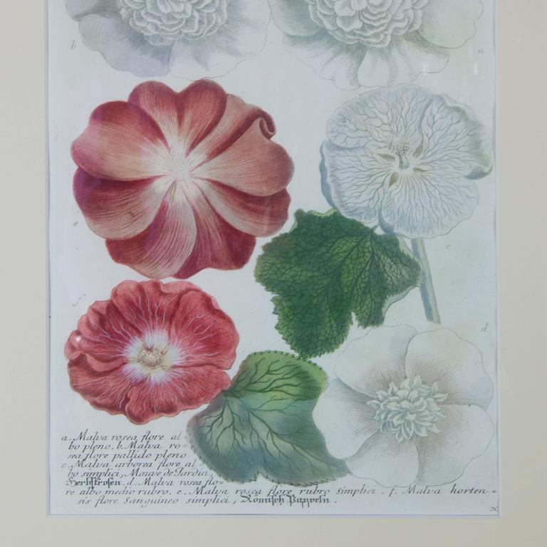 Renaissance Hand-Colored Botanical Floral Framed Art Print For Sale