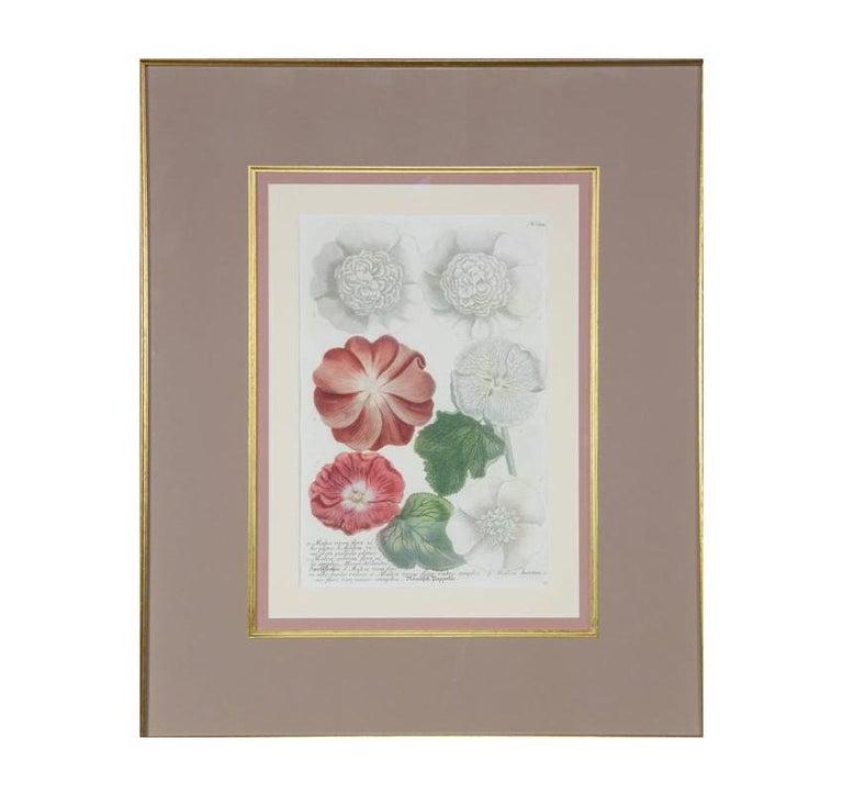 German Hand-Colored Botanical Floral Framed Art Print For Sale