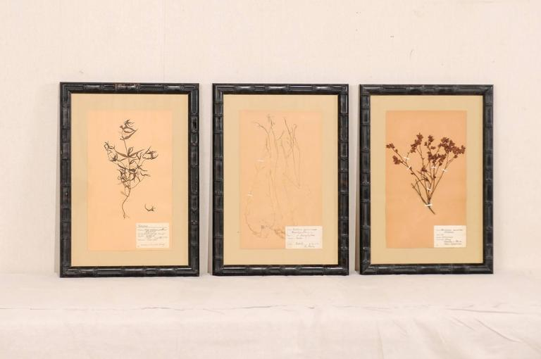 A set of three Swedish framed herbariums botanicals from the mid-20th century. These Swedish herbariums from the 1930s and 1950s are featured in black, bamboo designed carved wood frames. Each pressed botanical specimens includes a hand written