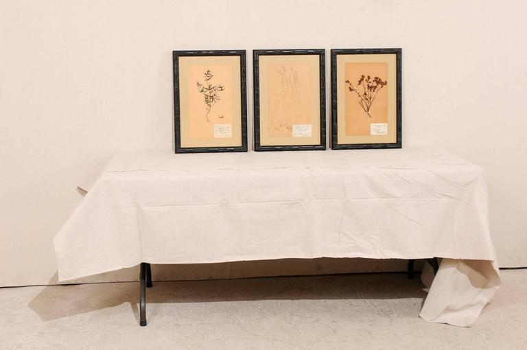 Set of Three Swedish Mid-Century Herbariums Botanicals in Dark Bamboo Frames For Sale 1