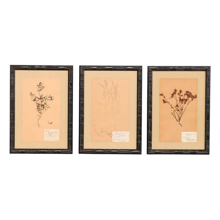 Set of Three Swedish Mid-Century Herbariums Botanicals in Dark Bamboo Frames For Sale
