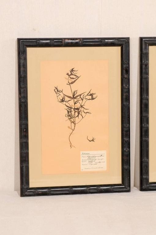 Painted Set of Three Swedish Mid-Century Herbariums Botanicals in Dark Bamboo Frames For Sale