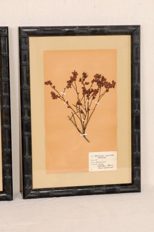 20th Century Set of Three Swedish Mid-Century Herbariums Botanicals in Dark Bamboo Frames For Sale
