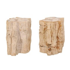 Pair of Live-Edge Petrified Wood Drink Tables With Polished Tops, Light Colored