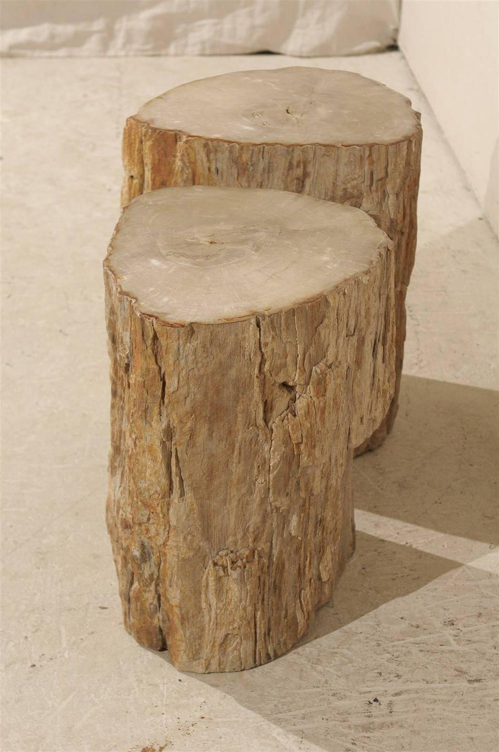 how to make petrified wood at home